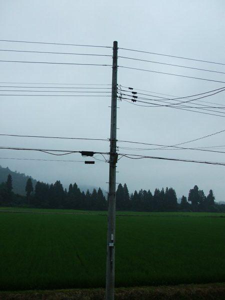 雨降りで空気がジメジメしています