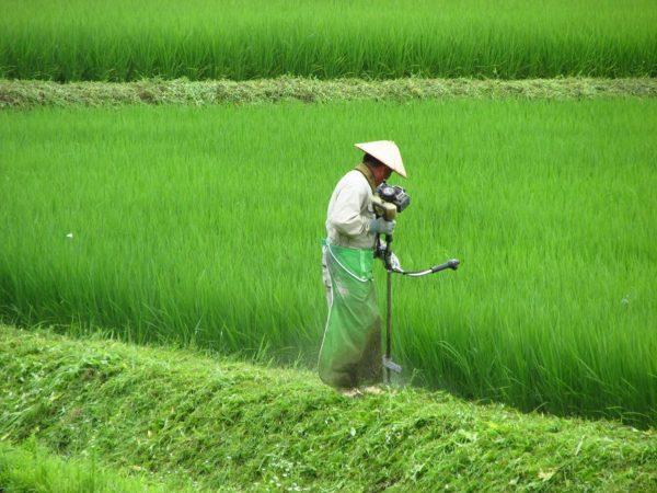 田んぼで草刈りをしている人