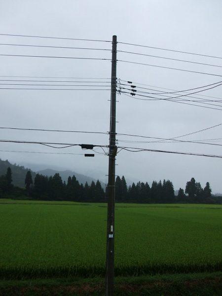 雨降りで涼しい朝です