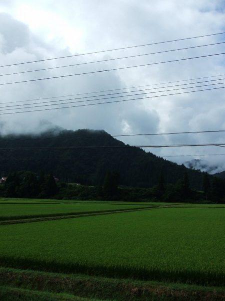 今朝は雨上がりで湿度が高いです