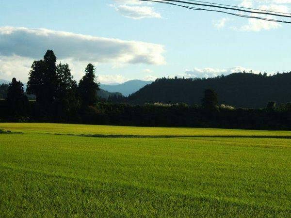 よく晴れていい天気の一日でした