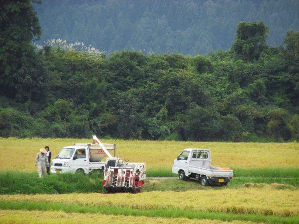 魚沼産コシヒカリの稲刈り作業