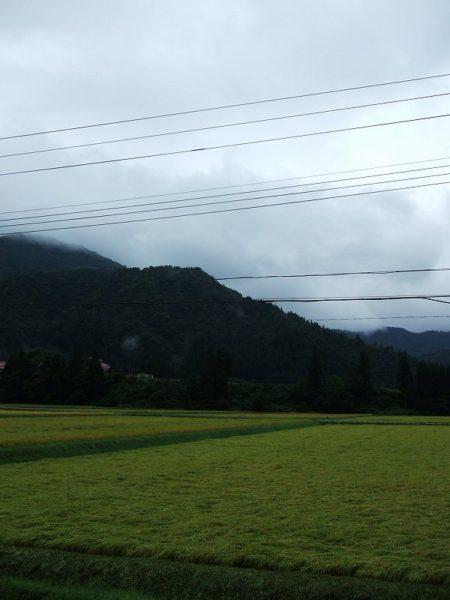 今朝は雨降りでとても涼しく感じました