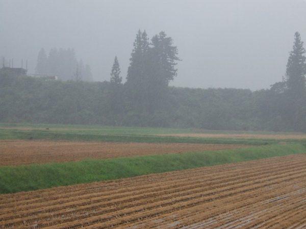 今日は本格的な雨降りです