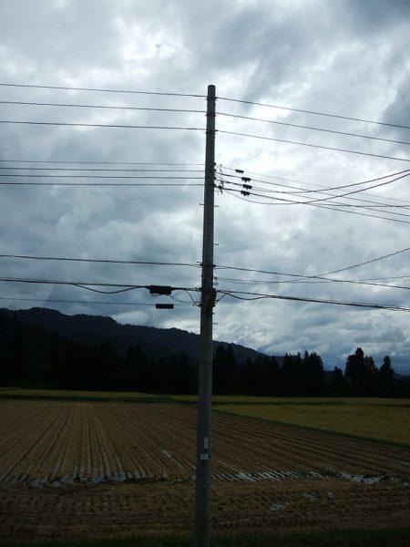 雨が止んで稲刈り作業が行われています