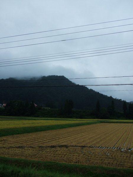 今日も雨降りで稲刈り作業が行われていません