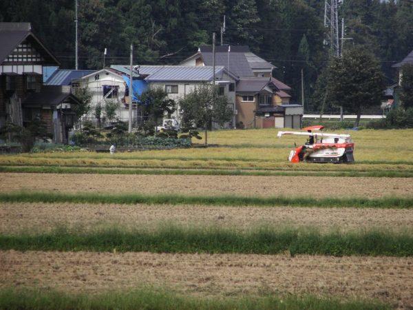 コンバインによる稲刈り作業