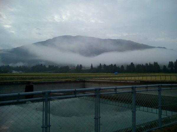 田んぼの脇の溜め池の水が抜かれています