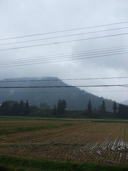 今朝は冷たい雨が降っています