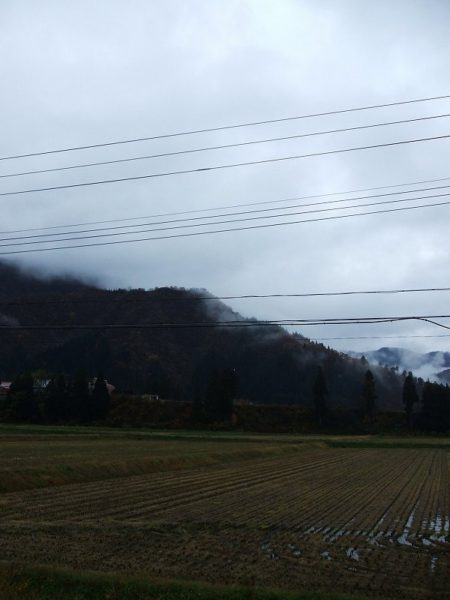 今朝は雨降りで寒いです