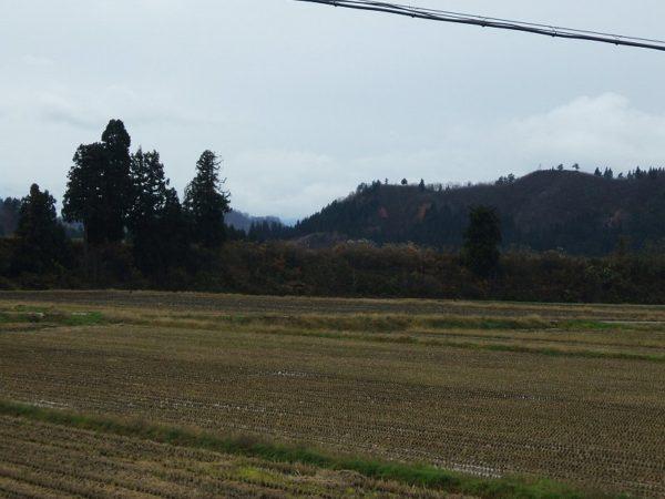 魚沼産コシヒカリの田んぼは今日も寒いです