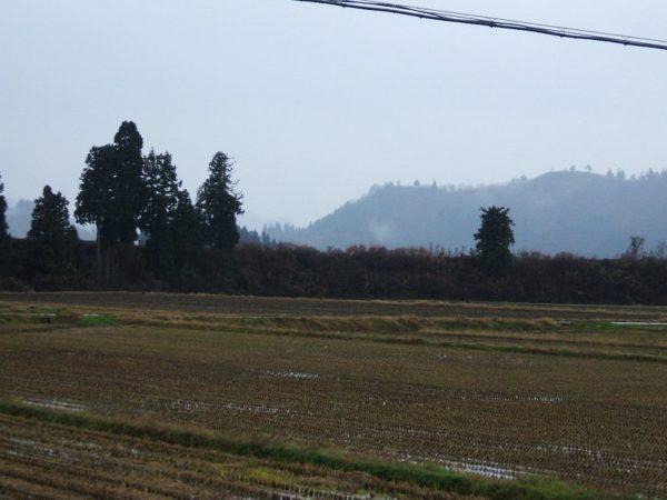今日は朝からずっと雨降りです