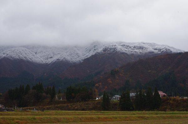 田んぼの向こうの山が中腹まで白くなっています