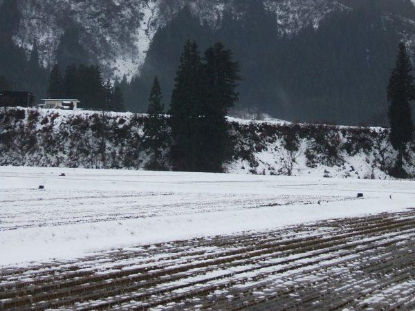 雨降りで田んぼの土が見えてきました