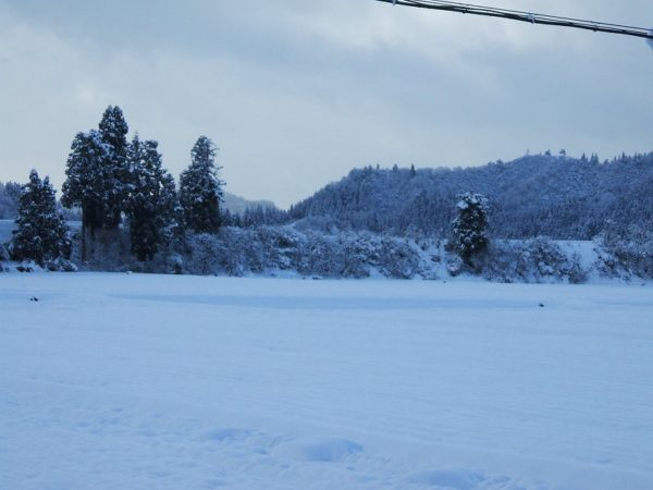 真っ白な冬景色になりました