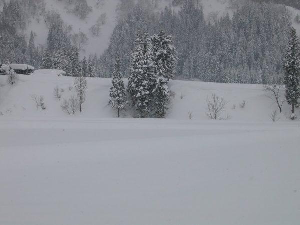昨晩からまた雪がかなり積もりました