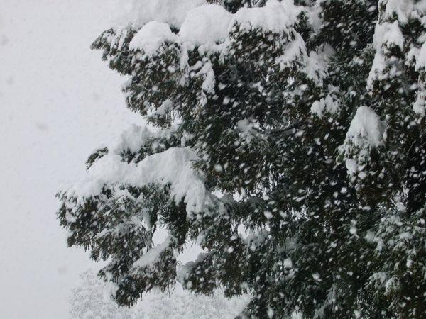 大粒の雪が激しく降っています