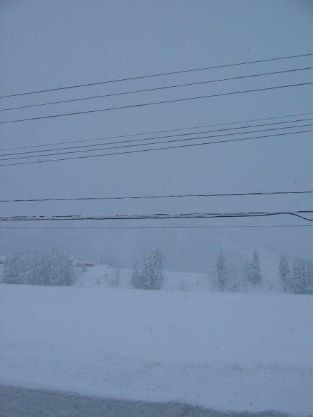 今日も本格的に雪が降っています