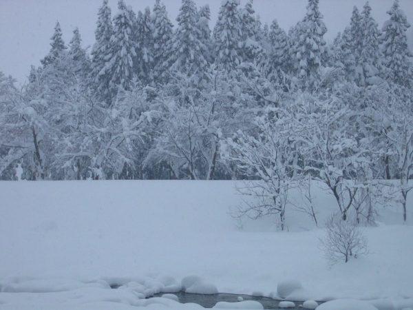 水無川の雪景色