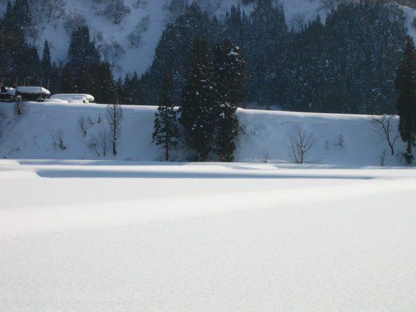 気温が上がって雪が解けて重たくなっています