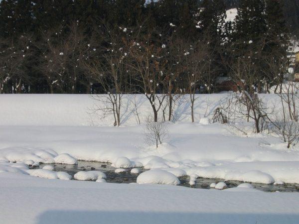 今年は少雪なので水面がたくさん見えています