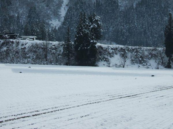 雪が止んでいます・・・もっと降らないと