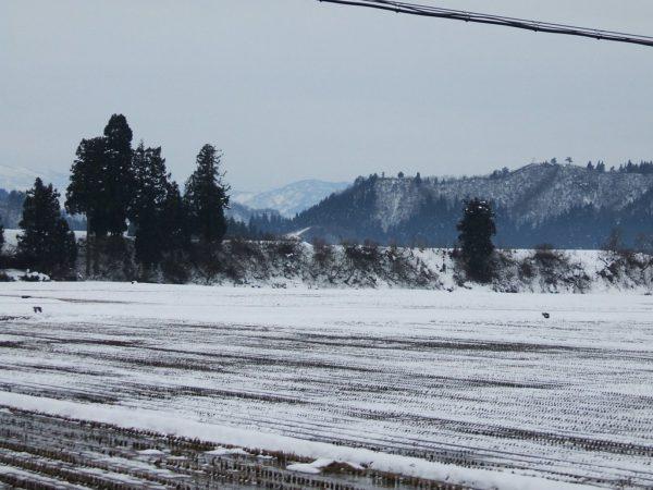 田んぼの土がかなり出てきました