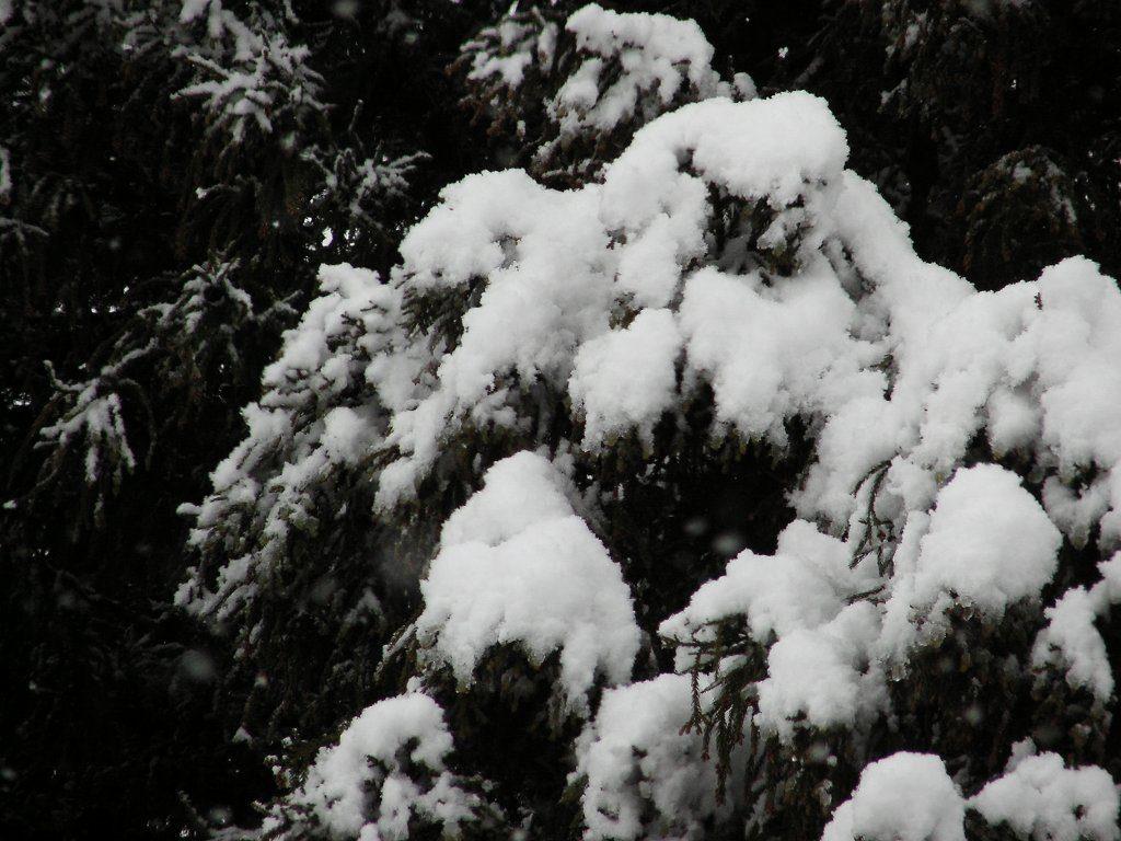 ようやく雪が降り始めました