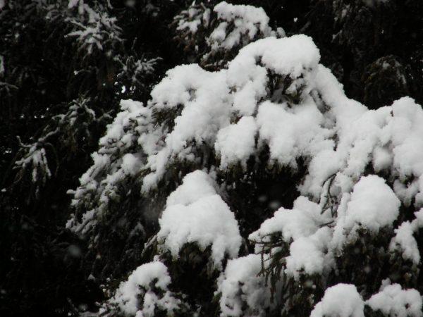 ようやく雪が降り始めましたが・・・