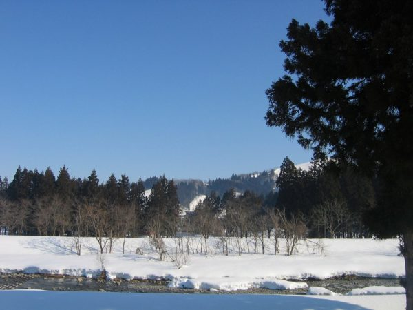 春を感じる水無川の景色