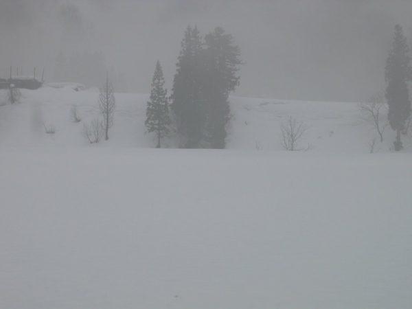 雨に煙る田んぼの雪景色