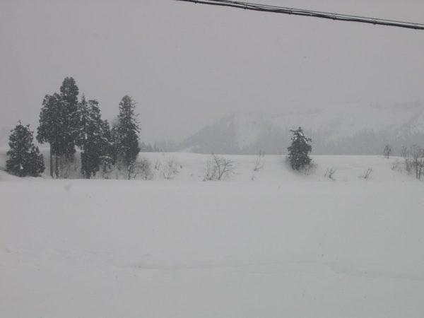 湿った重たい雪が降っています