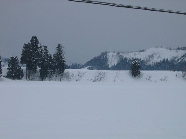 雪が湿って重たくなっています