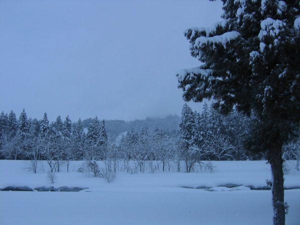 今日は一日中気温が低く乾いた雪が降っていました