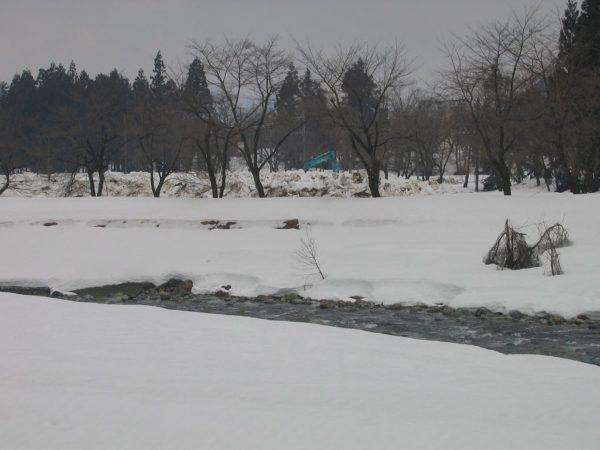 春が近づいて水無川の土手が見え始めました