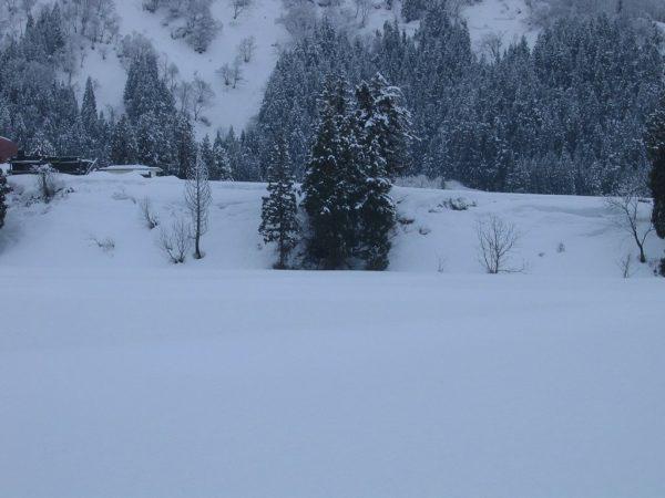 昨晩から雪が積もって春が遠くなりました