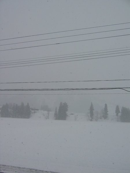 今日も雪・・・春が遠く感じます