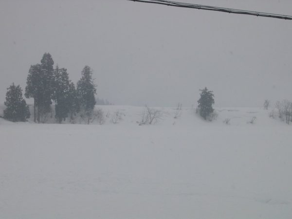 今朝もまた雪が少し積もりました