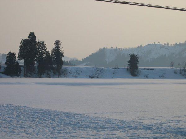 魚沼産コシヒカリの田んぼの雪はどんどん減ってきています