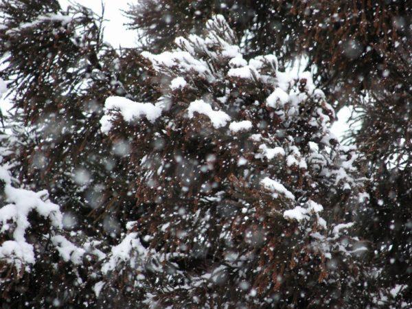 今日の新潟県南魚沼市は雪です