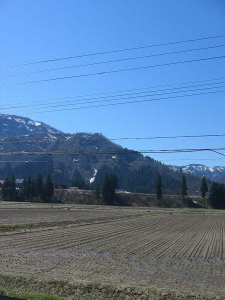 朝から青空が広がっていい天気になっています