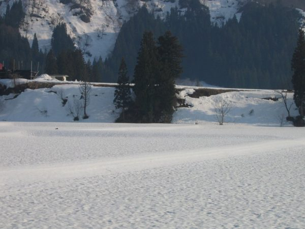 雪解けが進む魚沼産コシヒカリの田んぼ