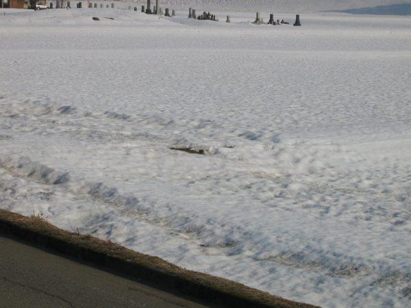 雪解けが進んで畦が見え始めました