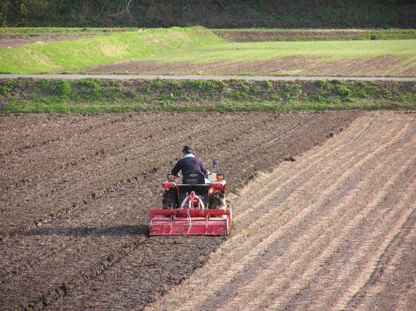 田んぼでトラクターによる田起こし作業が始まりました
