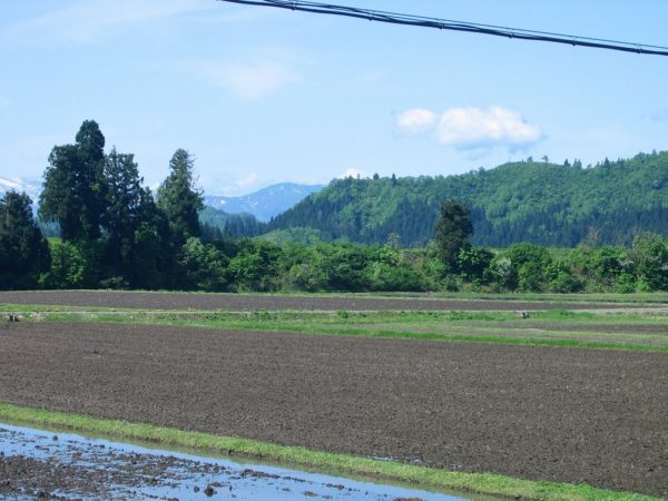 絶好の農作業日和
