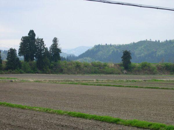 今朝は弱い雨降りです
