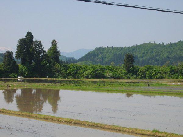魚沼産コシヒカリの田んぼは青空が広がっていい天気です