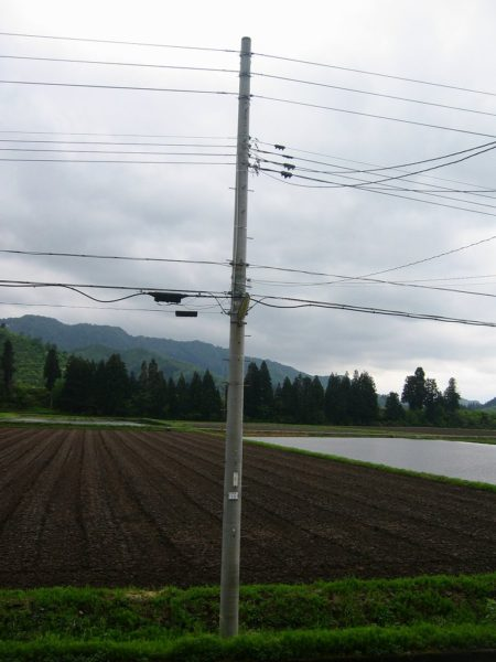 魚沼産コシヒカリの田んぼ