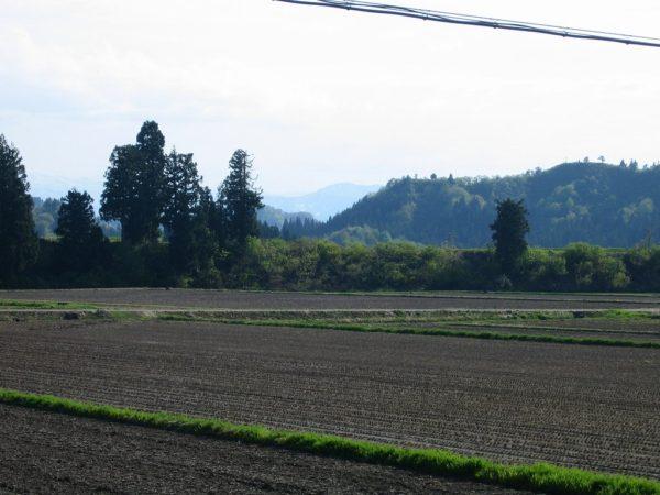 新潟県南魚沼市は夏を感じる暑い一日でした