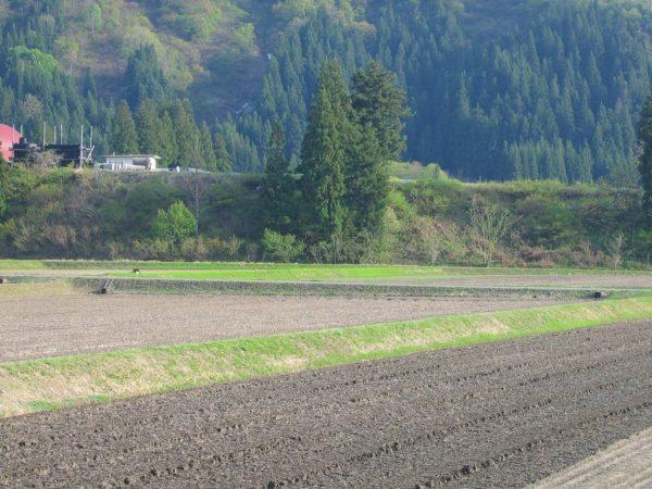 今日はいい天気で農作業日和